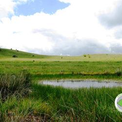 εποχικό λιμνίο στο οροπέδιο Καταβόθρας