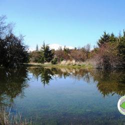 λιμνίο Καστριώτισσας